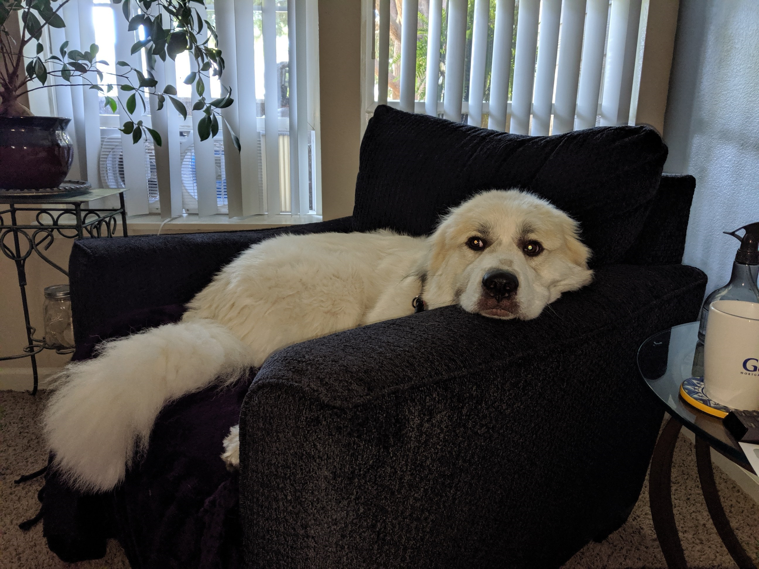 Koda Lounging2