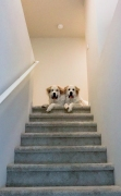 Charlie-and-Chloe-on-the-Stairs.Kristi-Zollars